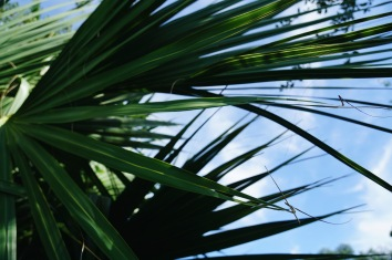 palmleaves in the zoo