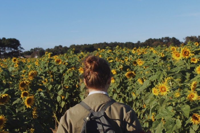 at the sunflower field